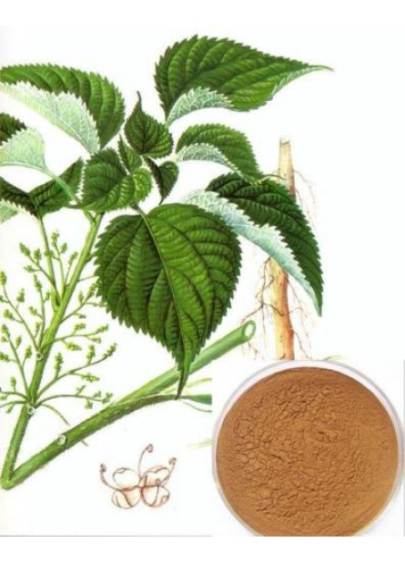 1 Kg 100% RAW Urticadeae Nettle root extract,Urtica Dioica Extract 20:1 Powder, for Rheumatic pain, urticaria, eczema, high blood pressure